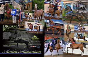 Minion Millennium The Morgan Horse magazine, January 2015